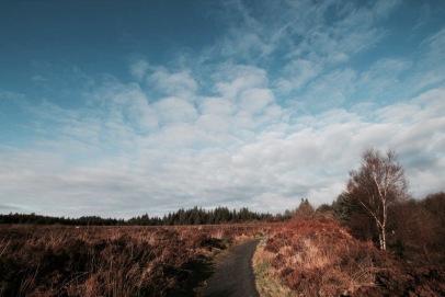elainesrovesntroves-an-creagan-forest-trail-5km