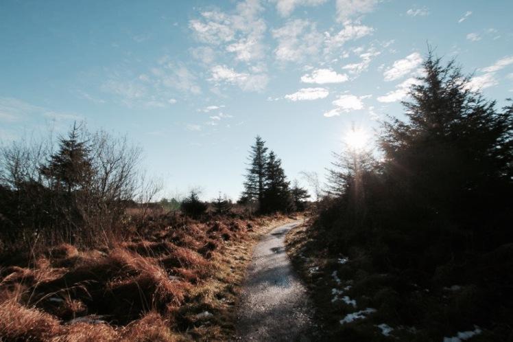 elainesrovesntroves-an-creagan-walsking-track
